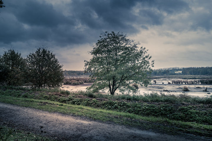 trees in a field on stormy day - weather and recovery - seasons
